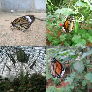 Butterfly park in my city Bangalore ...