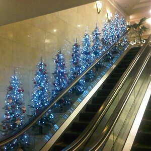 Christmas trees in the hotel.
